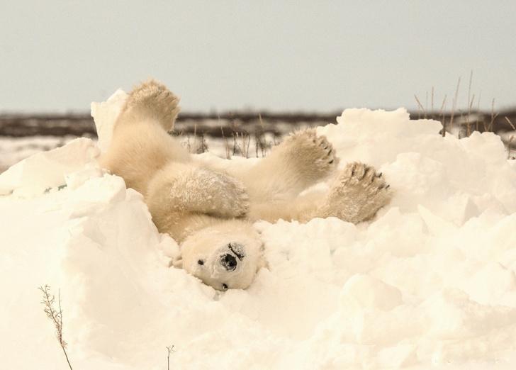 Фото №1 - Снежные игры