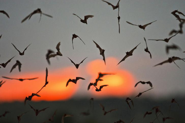 Фото №1 - Найдено самое быстрое летающее животное