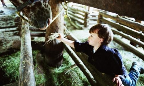 Фото №1 - Питерских малышей лошади учат ходить, говорить и улыбаться