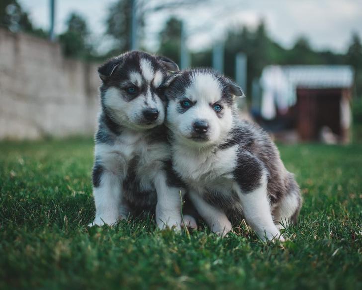 Фото №5 - 9 странных дизайнерских пород собак