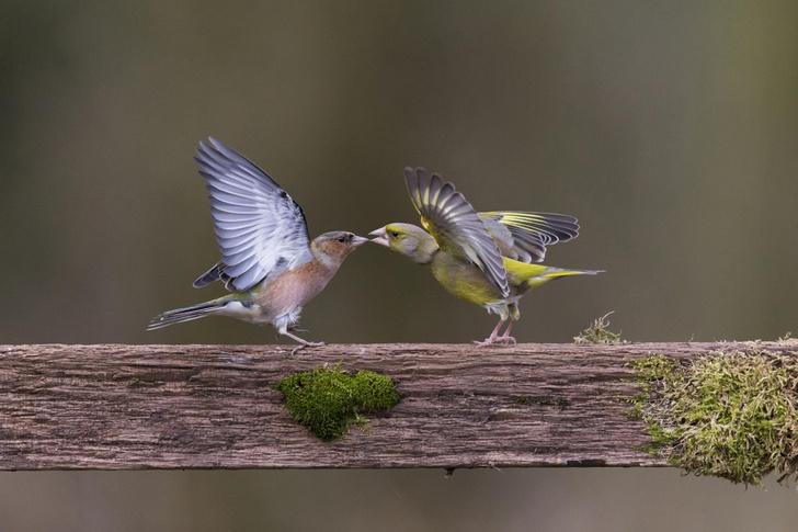 Фото №1 - Поцелуй или сражение?