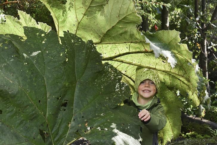 Фото №5 - Выросло так выросло: самое большое живое существо и еще 5 растительных рекордов