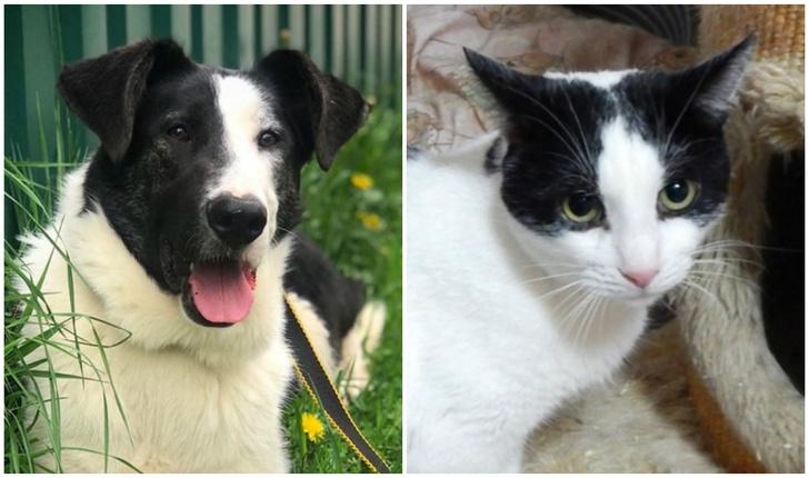 Фото №1 - Котопёс недели: кот Ришар и пес Бим ищут своих людей