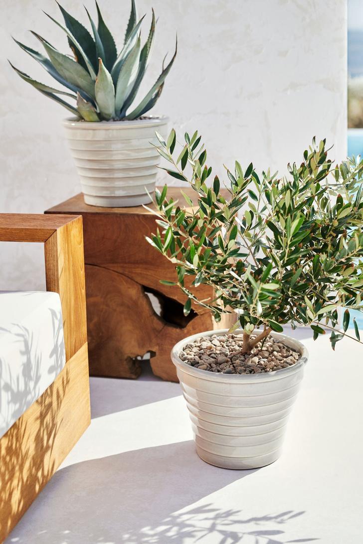 Фото №4 - Как правильно поливать комнатные растения: 5 советов