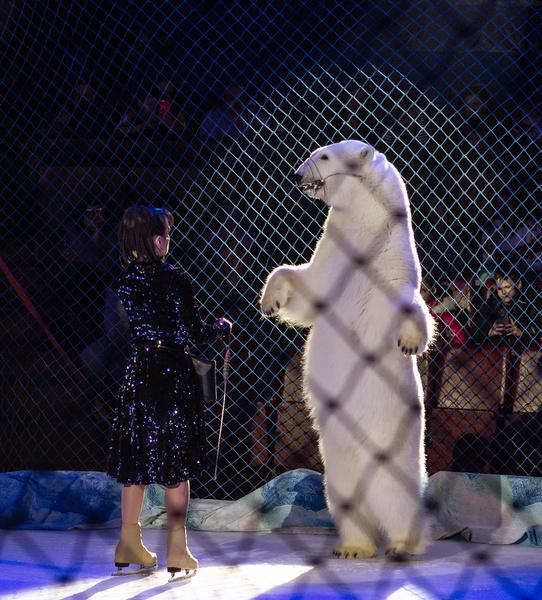 Фото №4 - Белые медведи в цирке: как приручить полярных хищников