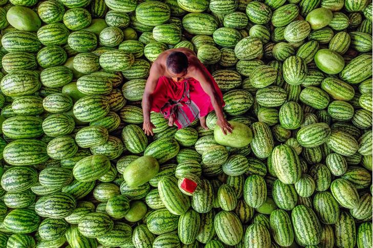 Фото №1 - Сбор урожая