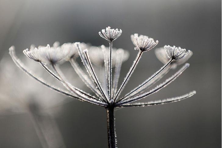 Фото №1 - Морозное утро