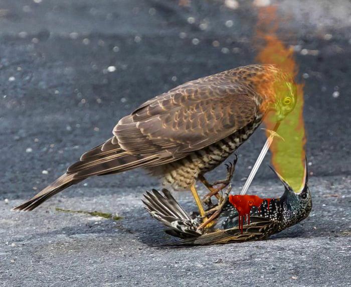 Фото №7 - Лучшие фотожабы про разборку ястреба и скворца