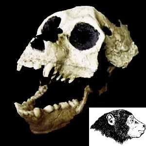Фото №1 - Homo sapiens оказался моложе