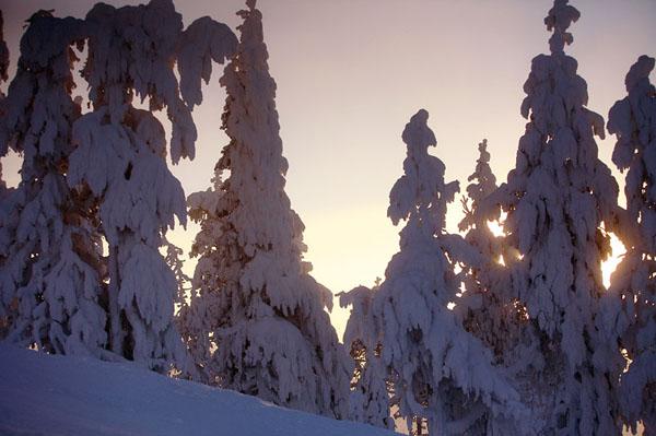 Фото №6 - Дед Мороз из страны лопарей