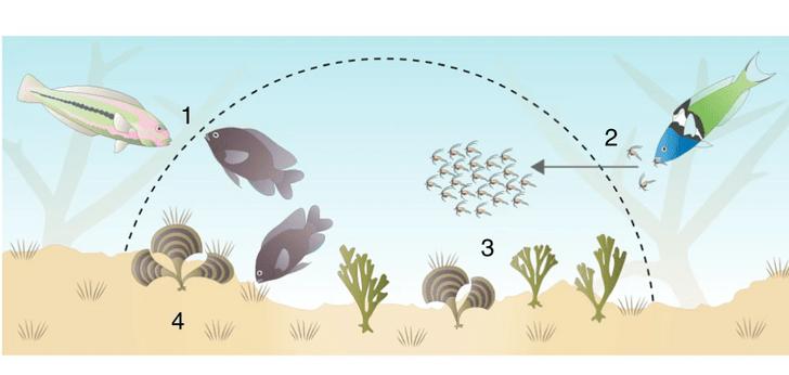 Фото №1 - Рыбы смогли приручить ракообразных