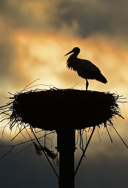 К чему снится гнездо
