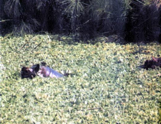 Фото №1 - Болота Кагеры