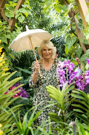 Фото №3 - Берем пример: 70-летняя Камилла Паркер Боулз занимается йогой и пилатесом