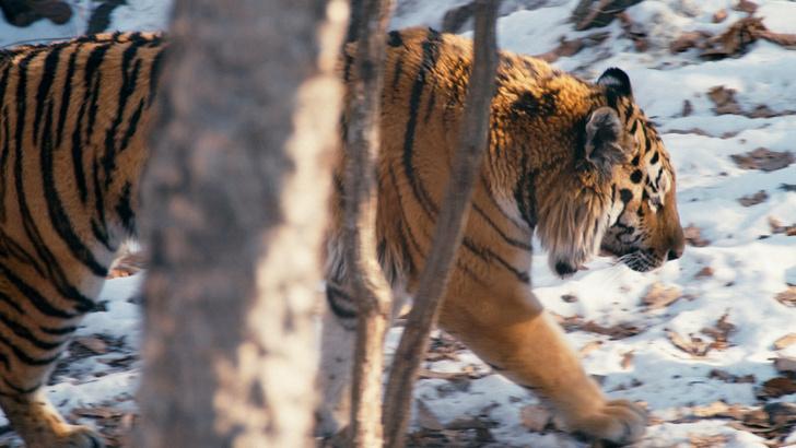 Фото №1 - Черная книга России: 5 истребленных животных, когда-то обитавших на территории нашей страны