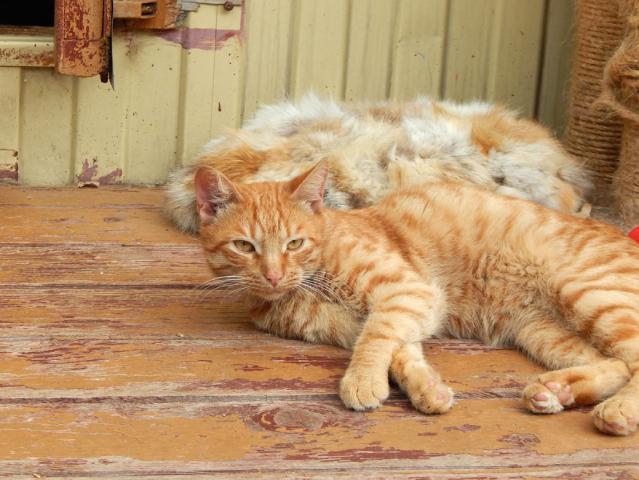 Фото №2 - Котопёс недели: пес Бонус и кот Леонсио