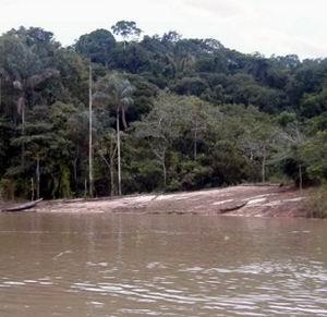 Фото №1 - Экологи из Перу нашли скрывающееся племя индейцев