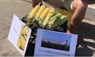 Саратовец продает «целебную кукурузу» с поля, на которое чудесным образом сел пассажирский самолет (видео)