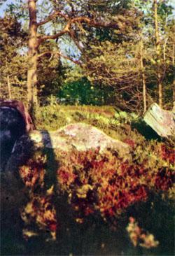 Фото №2 - Поморье, месяц туманов