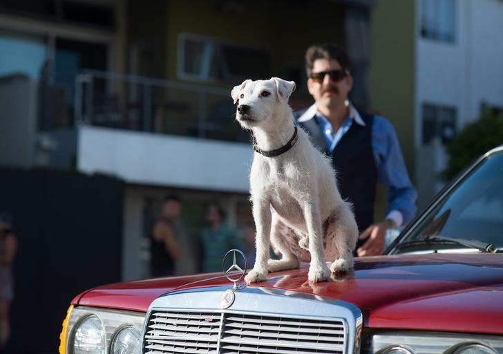 Фото №1 - 7 привычек собак и что они означают