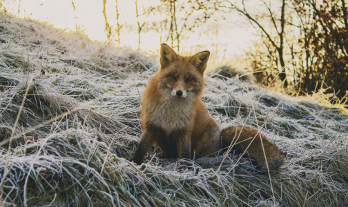 Фото №1 - Роспотребнадзор: С начала года животные покусали более четырех тысяч петербуржцев