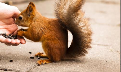 Фото №1 - Роспотребнадзор: Животные кусаются и царапаются круглый год и заражают бешенством