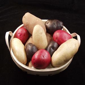 Фото №1 - Патент на картошку