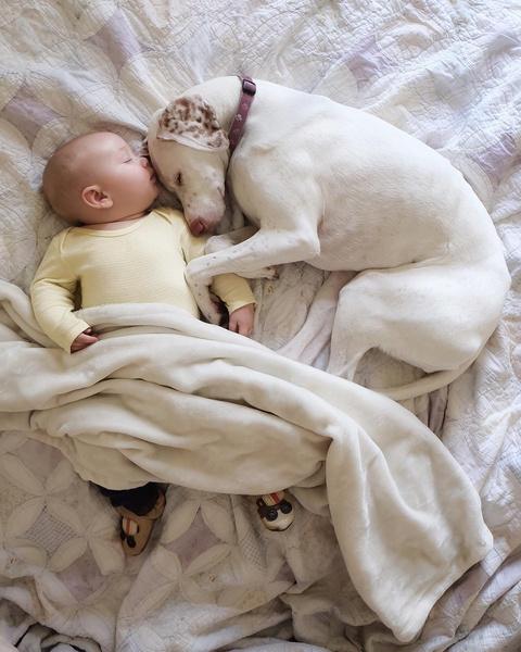 Фото №1 - Так трогательно: собака боялась всех, пока не встретила этого ребенка