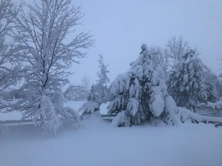Фото №1 - Ученые рассказали о парадоксе ушедшей зимы