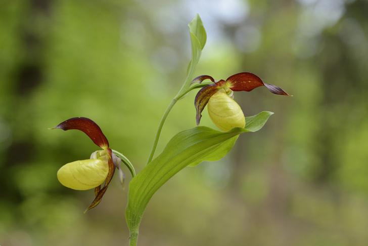 Фото №1 - Растения оказались способны «уходить в спячку» на 20 лет