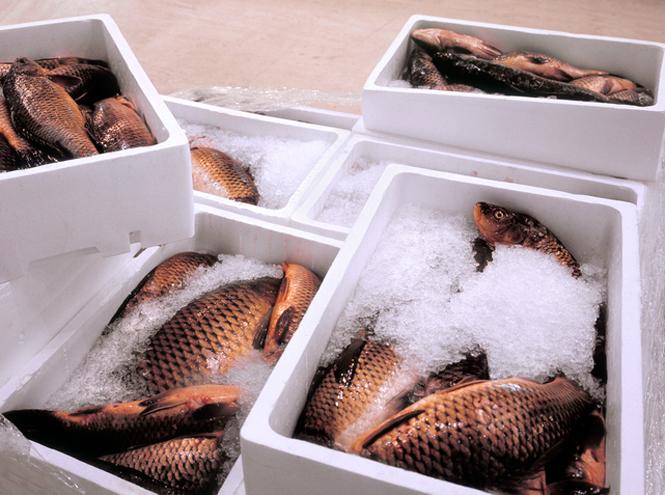 Фото №2 - Можно ли есть рыбу каждый день