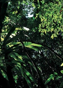 Фото №2 - Зеленое золото Баии