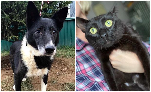 Фото №1 - Котопёс недели: собака Лара и кот Цыган