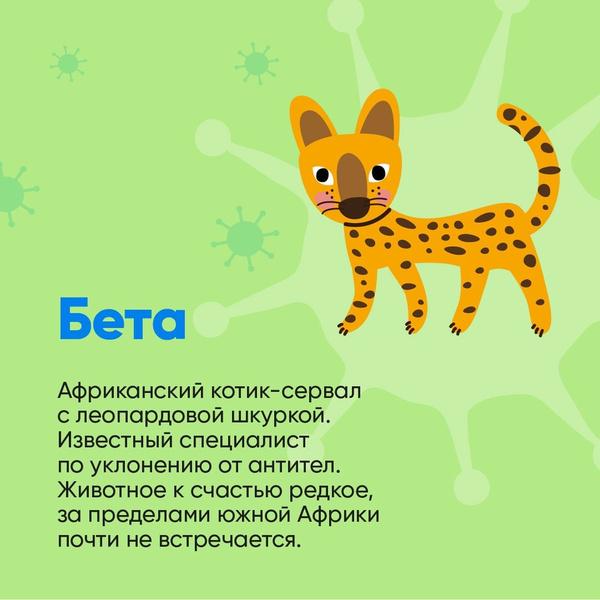 Фото №3 - Биолог Баранова сравнила штаммы коронавируса с милыми котиками: как они выглядят