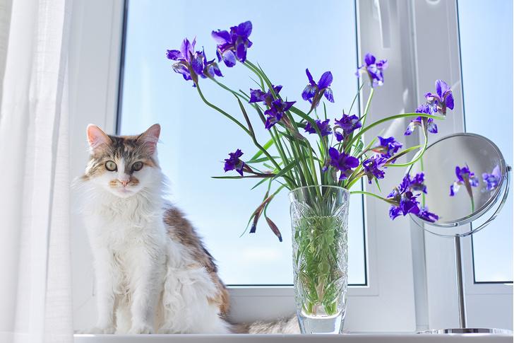 Фото №3 - 9 популярных цветов, которые смертельно опасны для котов