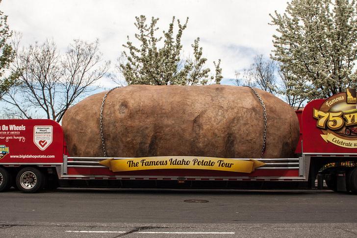 Фото №3 - 10 важных фактов про картофель