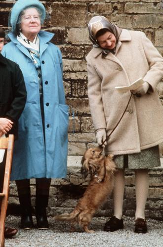 Фото №14 - Елизавета II и ее корги: история главной королевской страсти