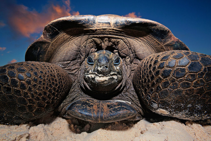 Фото №1 - Тише едешь— дольше будешь: долголетие и другие загадки гигантских черепах
