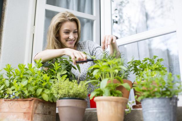 Фото №1 - Не только зелень: что съедобного вырастить на подоконнике