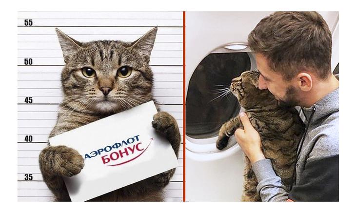 Фото №1 - Мемы про упитанного кота Виктора и «Аэрофлот»