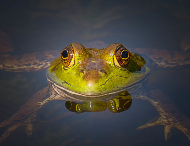 Фото №5 - Фотограф часами выжидал животных ради серии снимков, на которых они смотрят тебе прямо в глаза