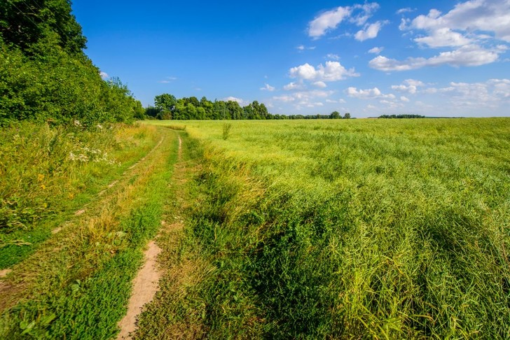 Фото №1 - Пригородные леса не успевают очищать воздух от городских выбросов