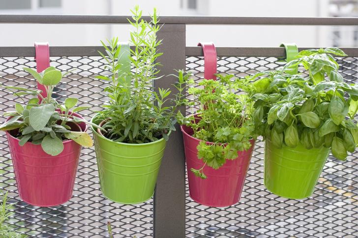 Фото №4 - Травы, овощи, цветы: как устроить мини-сад на балконе