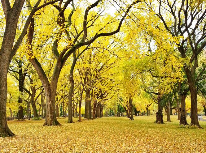 Фото №1 - Доброе дело: день Земли вместе с Timberland