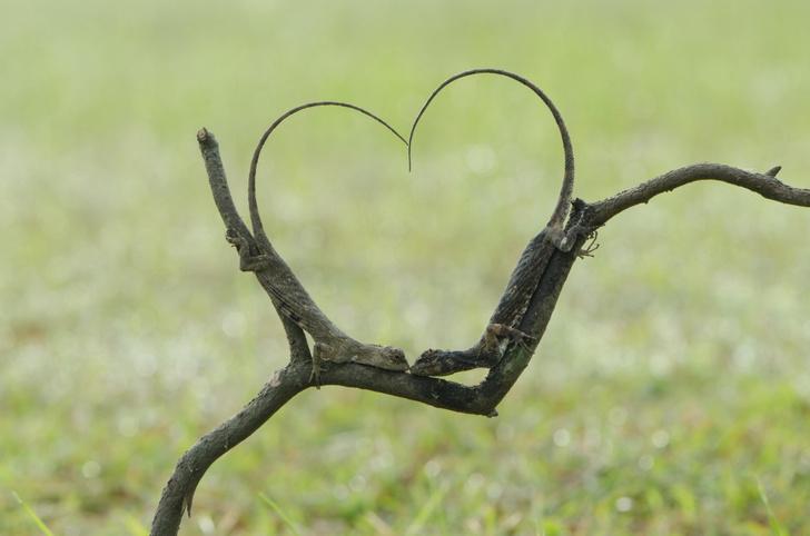 Фото №1 - Сердце любви