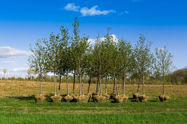 Фото №1 - Жители «Зеленой Рощи» требуют благоустроить территорию у своих домов