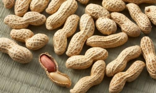 Фото №1 - Арахис больше не опасен для аллергиков