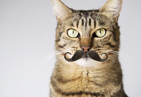 Код кота: 31 ответ на вопросы котовладельца