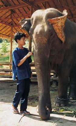 Фото №3 - Ход слоном