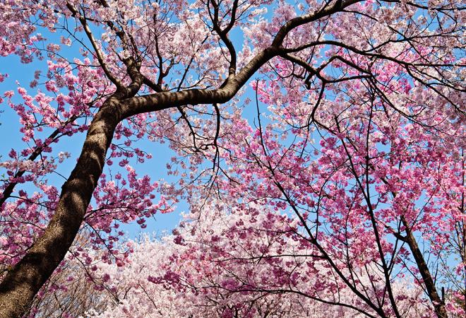 Розовые животные, розовая птица фото